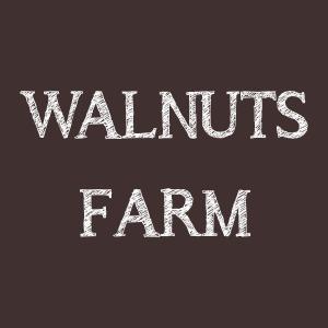 walnuts farm